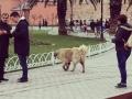 トルコわん犬なのか.jpg
