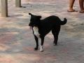 アユタヤ涅槃仏番犬